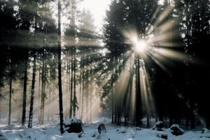 Inverno al Tonale